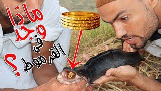 رجل أشترى قرموط أنظر ماذا وجد في داخله !! شيئ لا يصدق - اغرب سمك