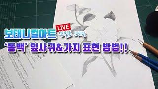 보태니컬아트 연필 그림 강좌 | 동백꽃 필 무렵에 동백 잎사귀&가지 그리기LIVE(#6) Drawin…