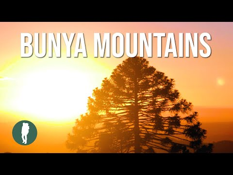 Bunya Mountains In HD