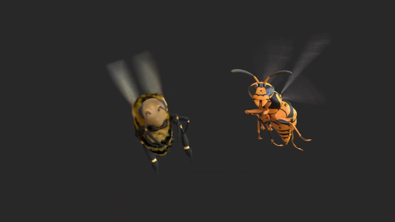 Bee Nest Removal - Remove Bees Nests Fast | JG Pest Control