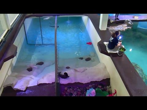 Otter Oasis Webcam