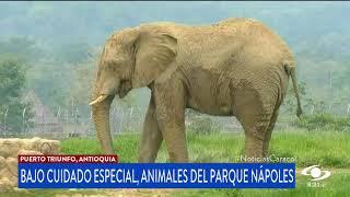 Sin visitantes, pero bajo todos los cuidados, permanecen animales del Parque Hacienda Nápoles