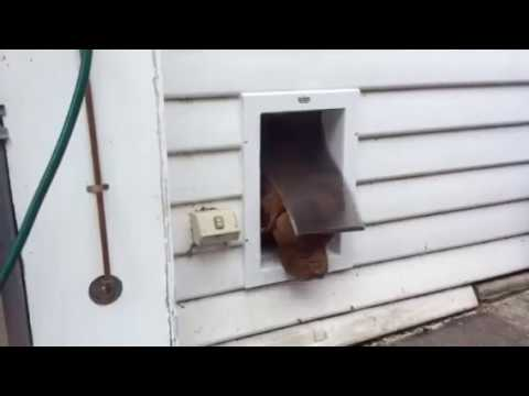 Large Staywell Dog Door Installed In A Weatherboard Timber Wall By