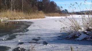 Solig vårvinterdag 8 feb 2015 - Råstasjön Solna