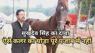 Muktsar Mela 2019 -सुखदेव सिंह ने किया दावा ऐसे कलर का  घोड़ा पूरे पंजाब में नहीं