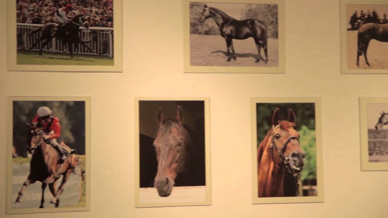 Sportwelt Pferderennen
