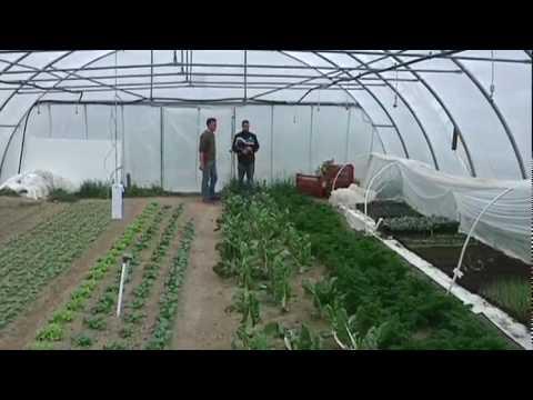 Jardin de Cocagne : le Bio au service de l'emploi - YouTube