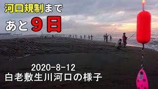 【鮭釣り】白老サケ釣りの様子2020-8-12