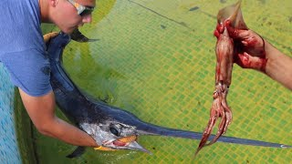 SWORDFISH Eats MASSIVE Squid & JAWS Takes IT!! **Awesome**