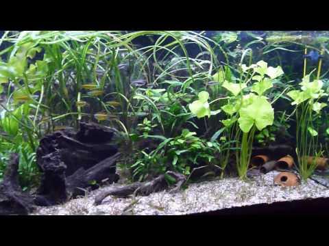 Aquarium 720 liter