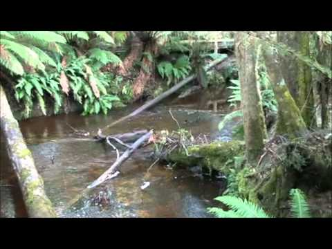 Hastings Thermal Hot Springs, Southern Forests, Tasmania