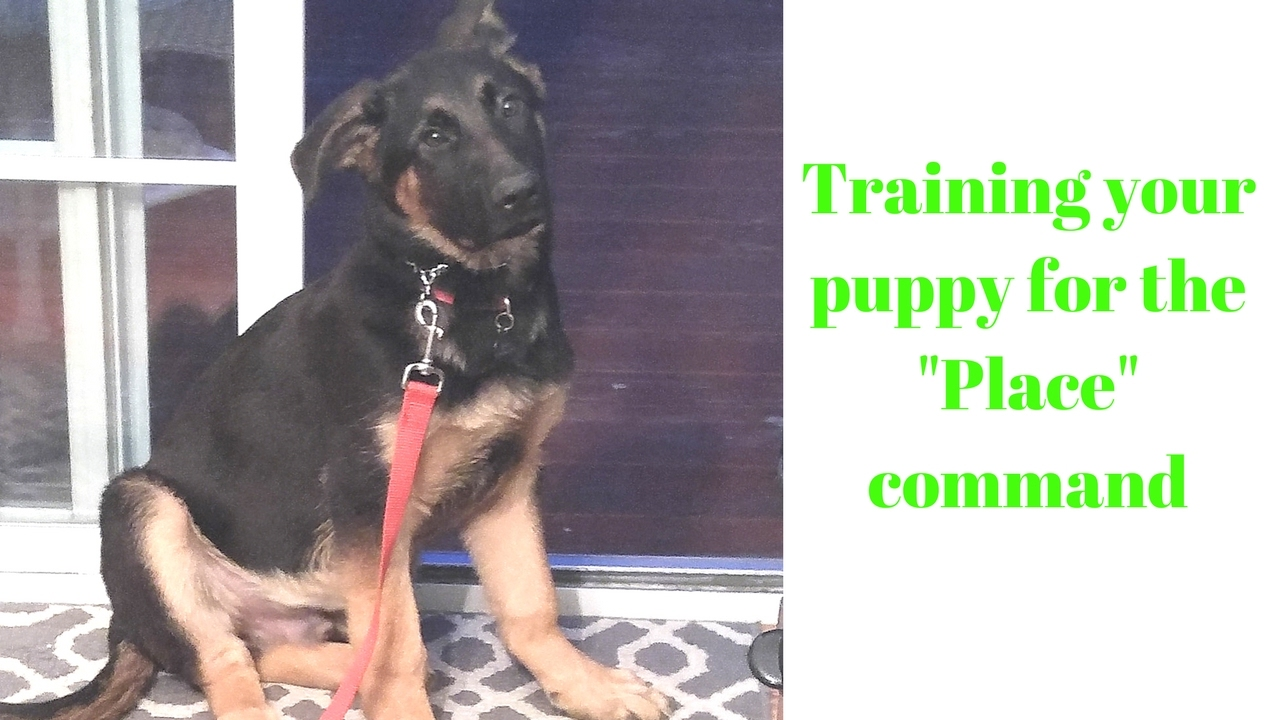 How to train your puppy the place command youtube how to train your puppy the place command ccuart Gallery