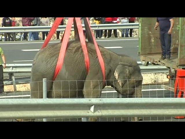 Así se vivió el accidente en la A-30 en el que ha fallecido un elefante