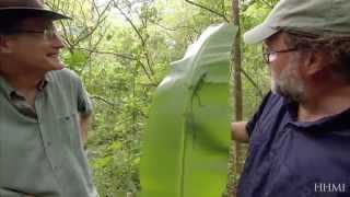 lizard olympics natural selection hhmi biointeractive video