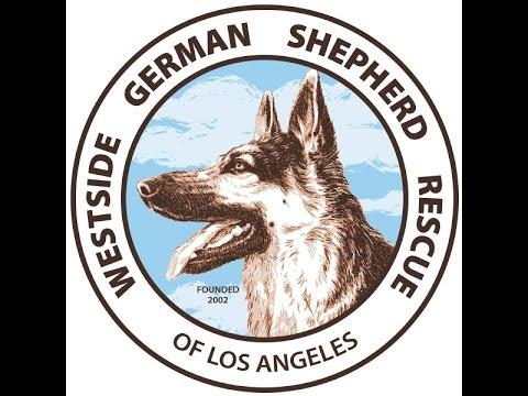 Westside German Shepherd Rescue -