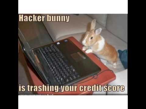 Funny Rabbit Memes Youtube