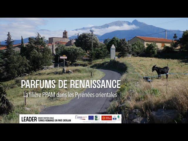 La filière des Plantes à Parfum Aromatiques et Médicinales dans les Pyrénées-Orientales