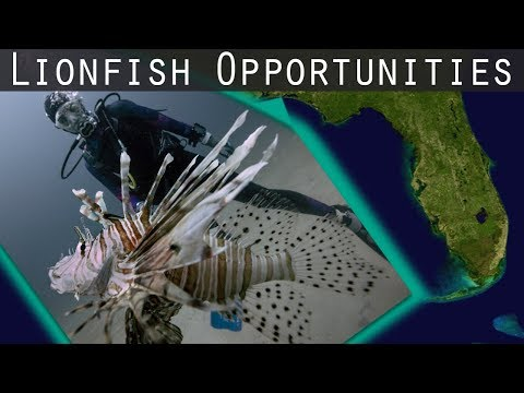 Lionfish Opportunitites On The Emerald Coast