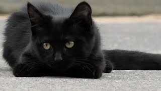 two black street cats live near a closed hotel.