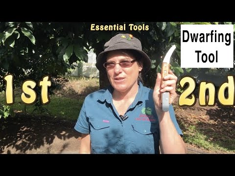 Dwarfing Tool: Cincturing or Girdling Fruit Trees | Quicker Fruiting