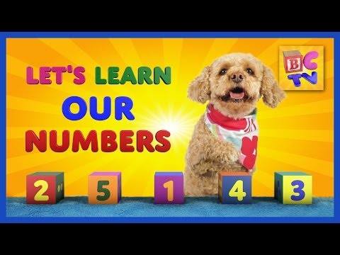 Learn Numbers with Lizzy the Dog   Teach children to count to 10 in English