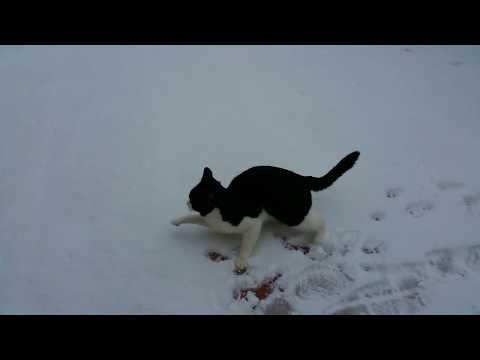 Cat Playing In the Snow - 猫在雪地里玩耍  - 猫は雪の中で遊ぶ - Original