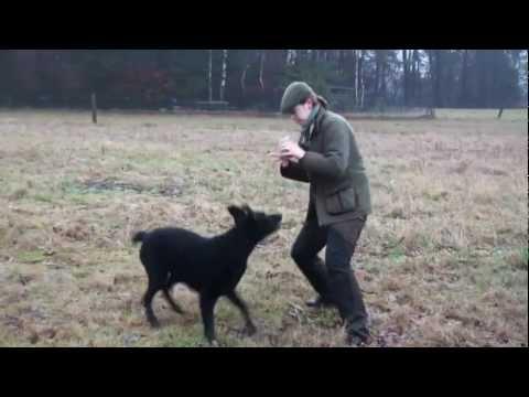 Hundetraining Hunde motivieren Clicker Clickertraining Target Stick