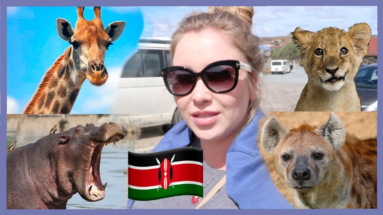 КЕНИЯ! Жирафы, бегемоты и львы