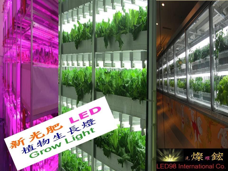 Led植物生長燈應用 Grow Light Applications 植物工廠植物燈系列 Youtube