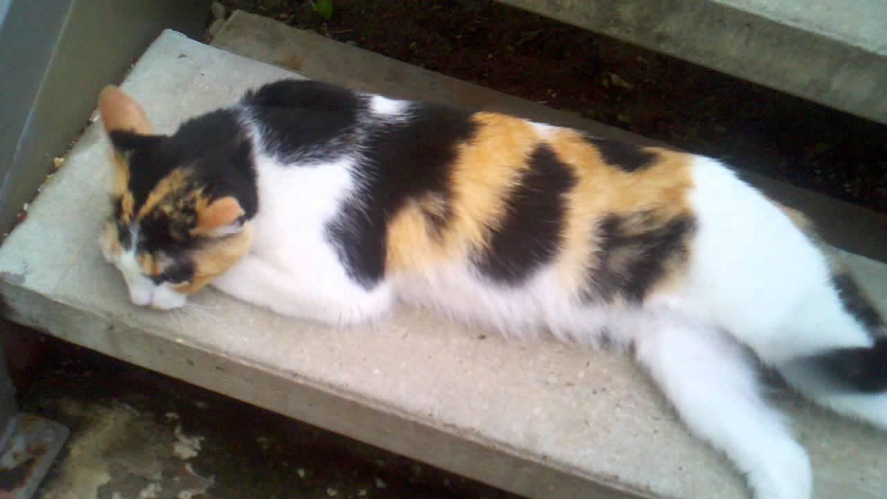 friendly stray cat youtube