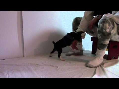 how-to-stop-puppy-nipping-and-biting