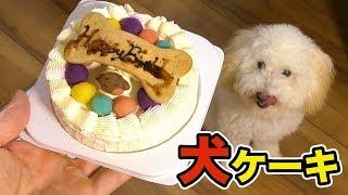 犬に高級なケーキを与えたら食べるか!? 【検証】 PDS