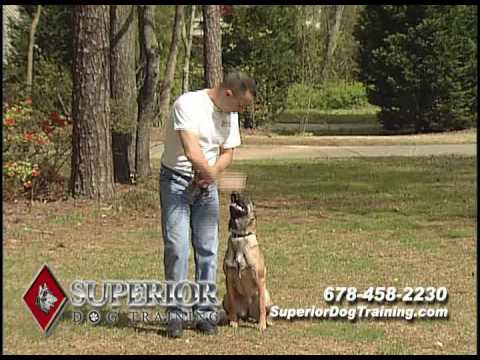 dog-training-in-atlanta-ga.-by-superior-dog-training
