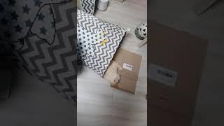 고양이 : 바닥에 종이박스 깔고 분리수거함통에서 눈뜨고…
