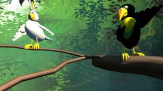 Tropical Birds: Test 1 (The Birds the Word)