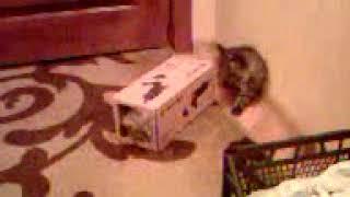 Два котёнка и одна коробка