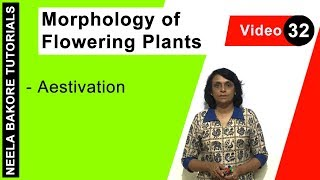 Morphology of Flowering Plants   Aestivation
