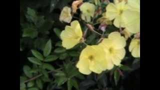 магазин цветов алматы mir-cvetov.kz(, 2013-05-31T10:00:35.000Z)