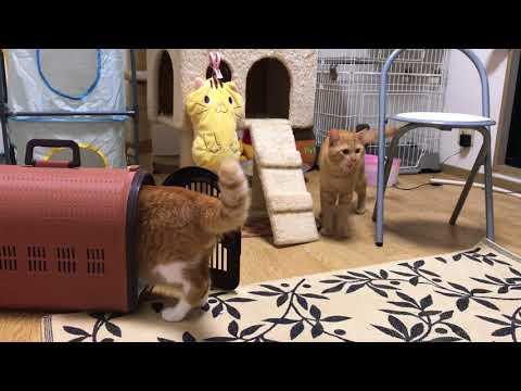 るるちゃんおかえりなさい Lulu-chan Welcome back.『保護猫るる らら物語』