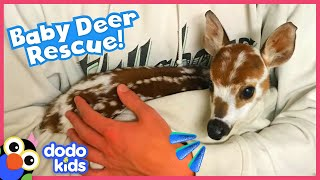 Lady Finds A Tiny, Lost Baby Deer In The Forest | Rescued! | Dodo Kids