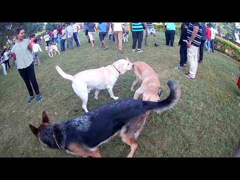 Dogs Park at Hyderabad Necklace Road Part 2