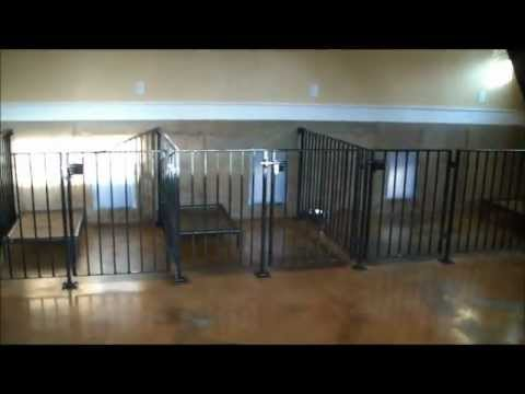 Indoor Dog Facility Design Tips And Ideas To Prevent Pests