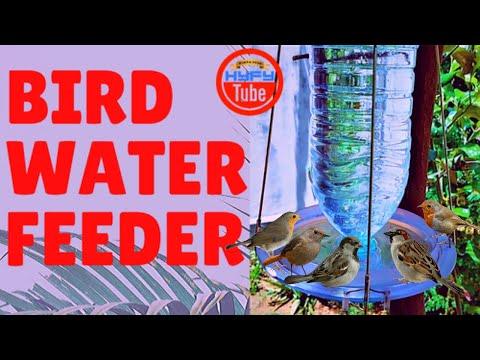 bird-water-feeder:-how-to-make-bird-water-feeder-using-plastic-bottle-2020-(simple-&-quick!)