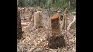 the negative effects of deforestation making a difference