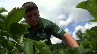 The Big Idea: Growing a Better Strawberry in NJ
