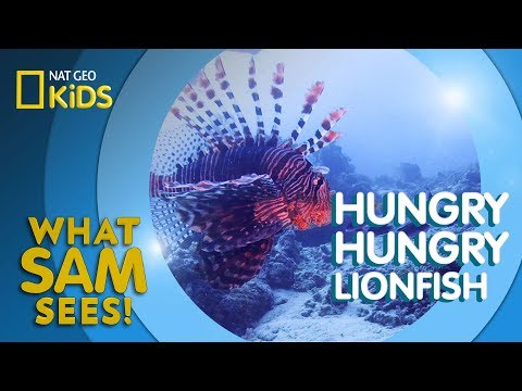 Hungry Hungry Lionfish | What Sam Sees