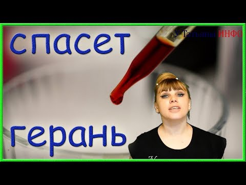 Капля ЙОДА — и ты не узнаешь свою герань (пеларгонию)!