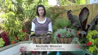 Amateur Gardening: How to plant a winter hanging basket