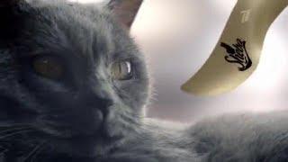 Sheba. Так кошки понимают нежность