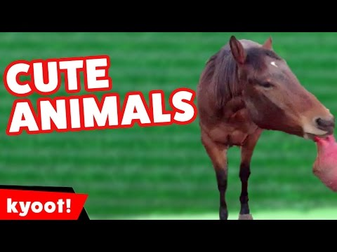 Funniest Farm Animals & Pets Videos of 2016 Weekly Compilation | Kyoot Animals
